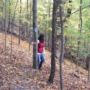 """Go get """"lost"""" in the woods..."""